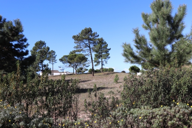 Land for sale in Comporta